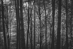 Black & White Forest #04