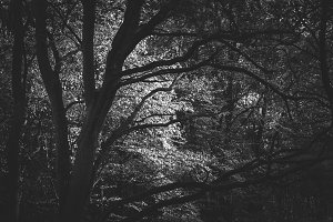 Black & White Forest #05