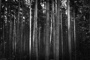 Black & White Forest #01
