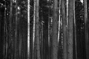 Black & White Forest #02