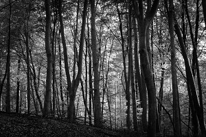 Black & White Forest #07