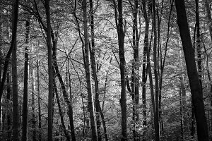 Black & White Forest #08