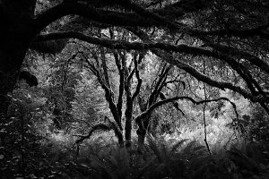 Black & White Forest #14