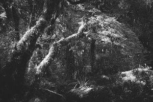 Black & White Forest #17
