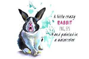 A little crazy rabbit