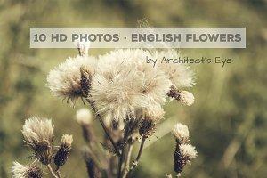 10 English Flowers