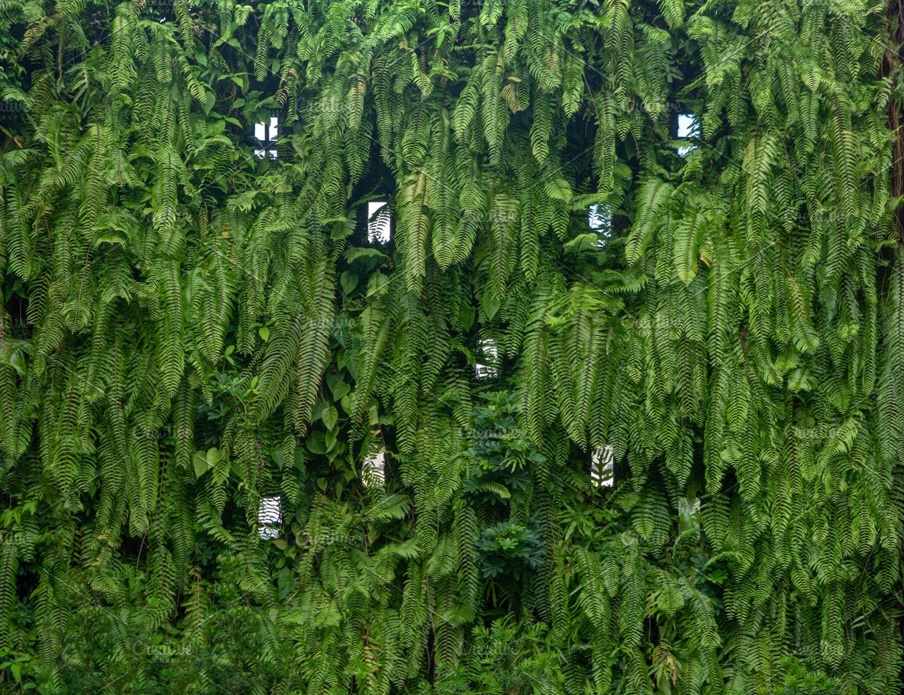 Vertical Garden Lush Green Wall Patt