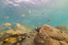 Many fish, anemonsand sea creatures by  in Nature