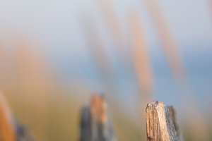 french fence