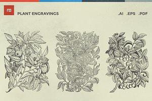 20 Plant Engravings