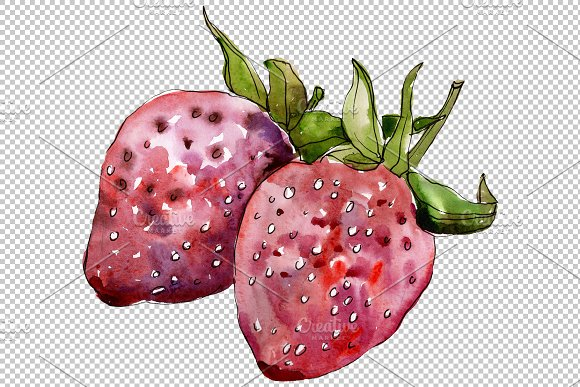 "Strawberry cultivar ""Malvina"" in Illustrations - product preview 2"