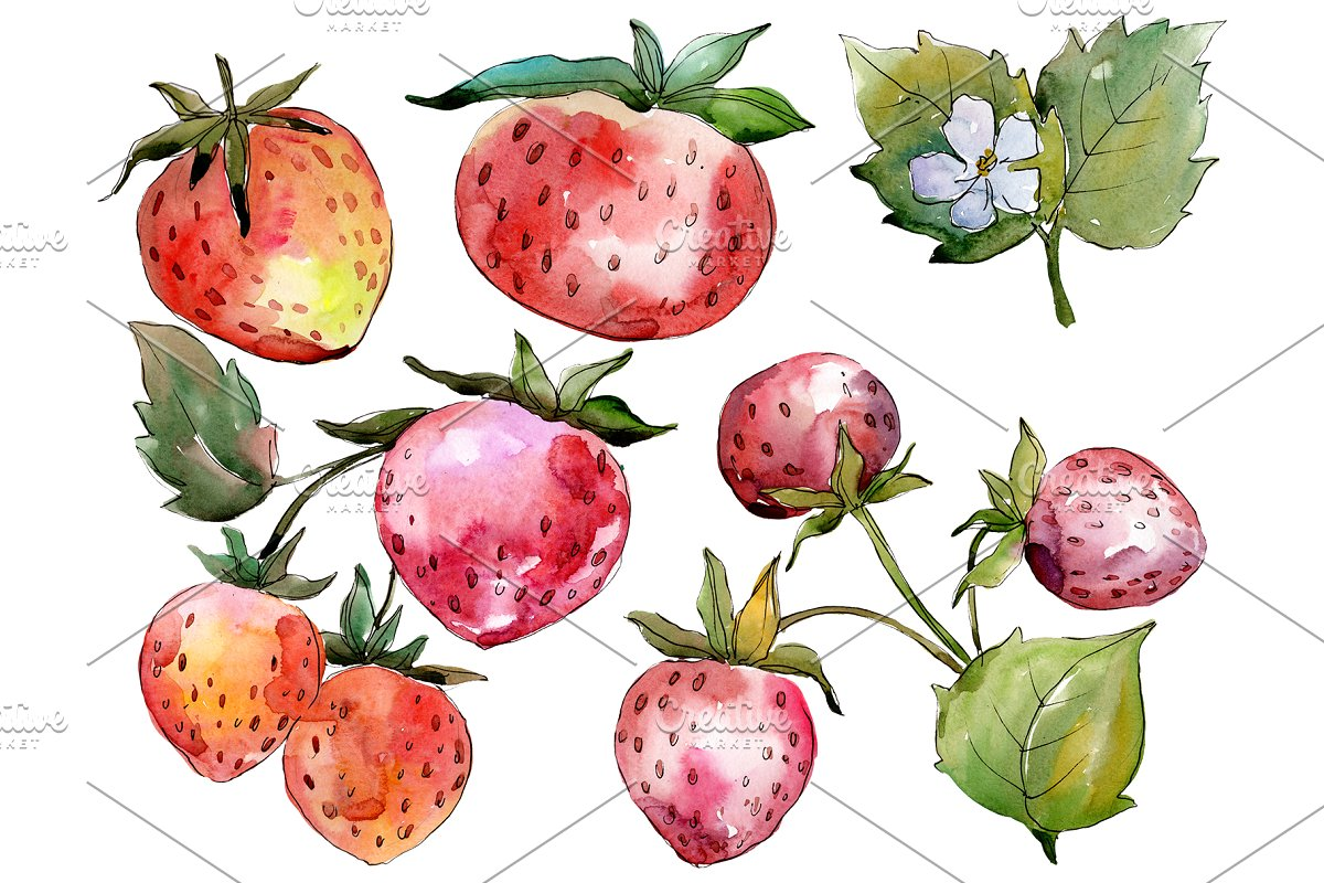 Strawberry Queen Elizabeth watercor in Illustrations - product preview 8