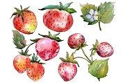 Strawberry Queen Elizabeth watercor