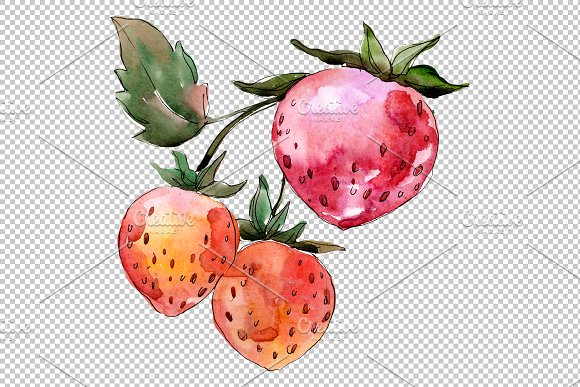 Strawberry Queen Elizabeth watercor in Illustrations - product preview 3