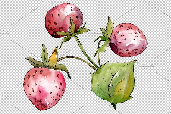 Strawberry Queen Elizabeth watercor in Illustrations - product preview 5