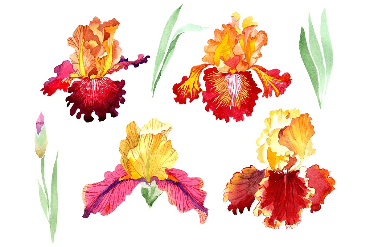 Iris plant Bold encounter watercolor in Illustrations - product preview 8