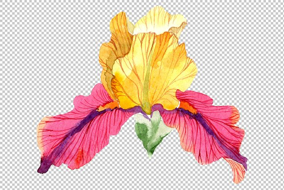 Iris plant Bold encounter watercolor in Illustrations - product preview 6
