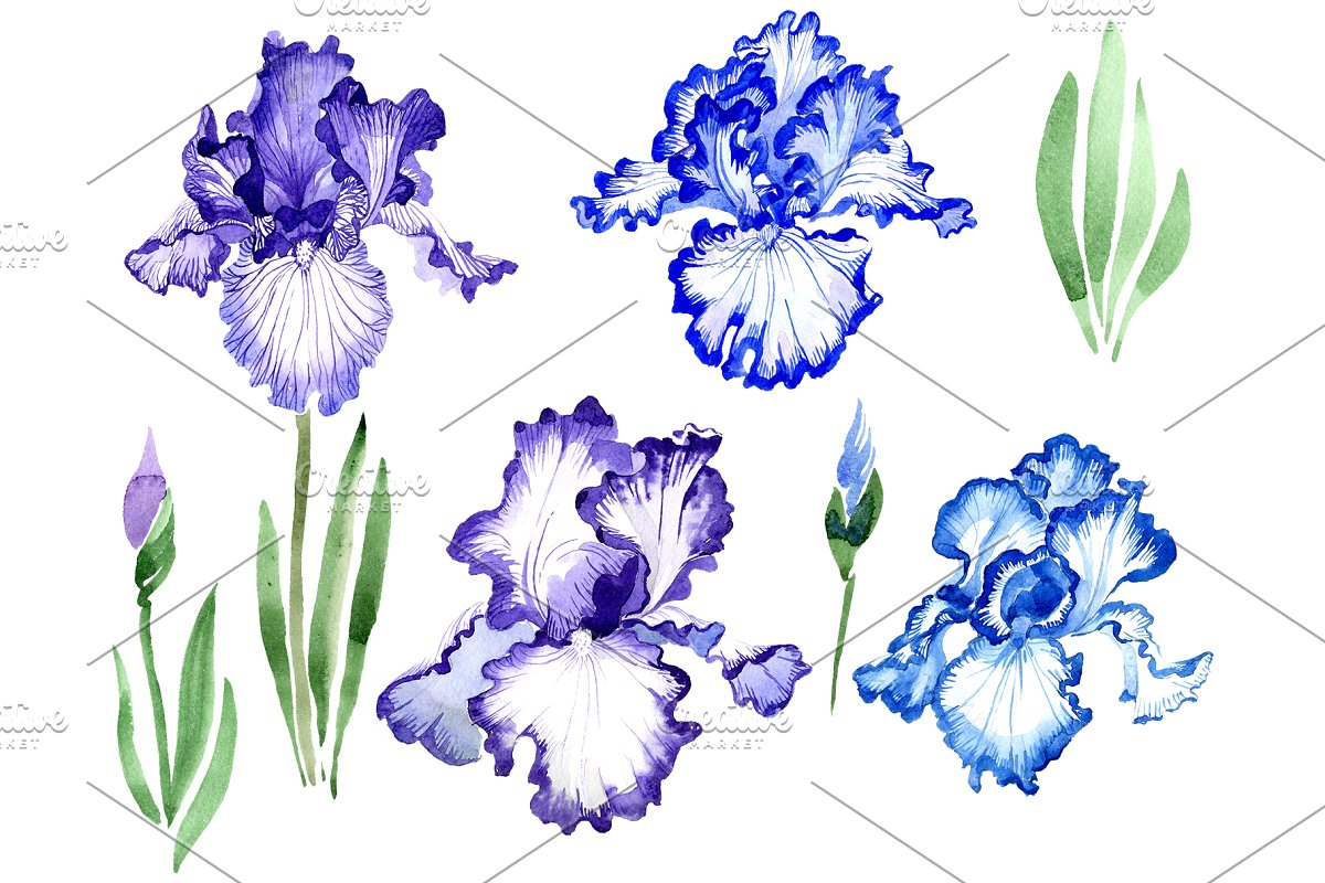 Iris bearded blue watercolor png in Illustrations - product preview 8