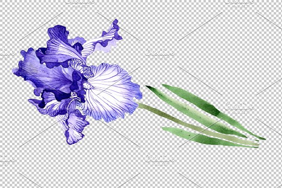 Iris bearded blue watercolor png in Illustrations - product preview 3