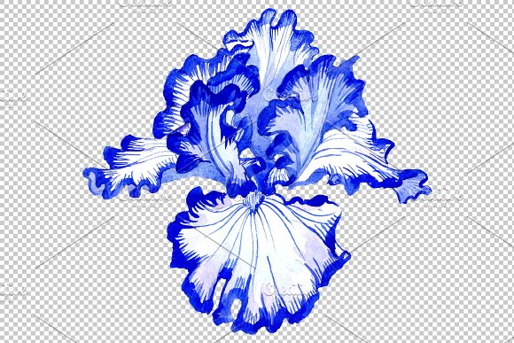 Iris bearded blue watercolor png in Illustrations - product preview 4
