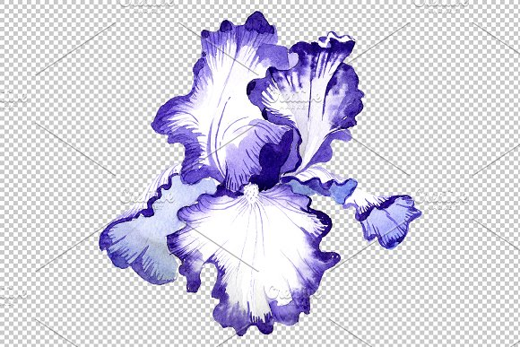 Iris bearded blue watercolor png in Illustrations - product preview 6