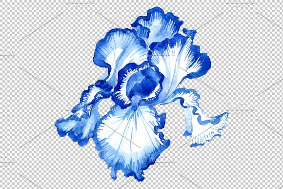 Iris bearded blue watercolor png in Illustrations - product preview 7