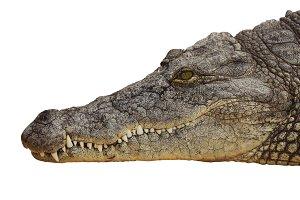 Crocodrile