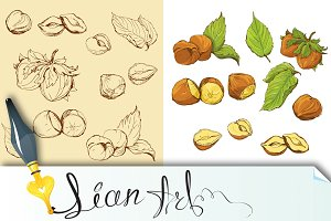 highly detailed hand drawn hazelnuts