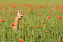 Hand with thumbs up in the middle of a meadow.jpg