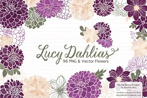 Plum Purple Dahlia Flowers
