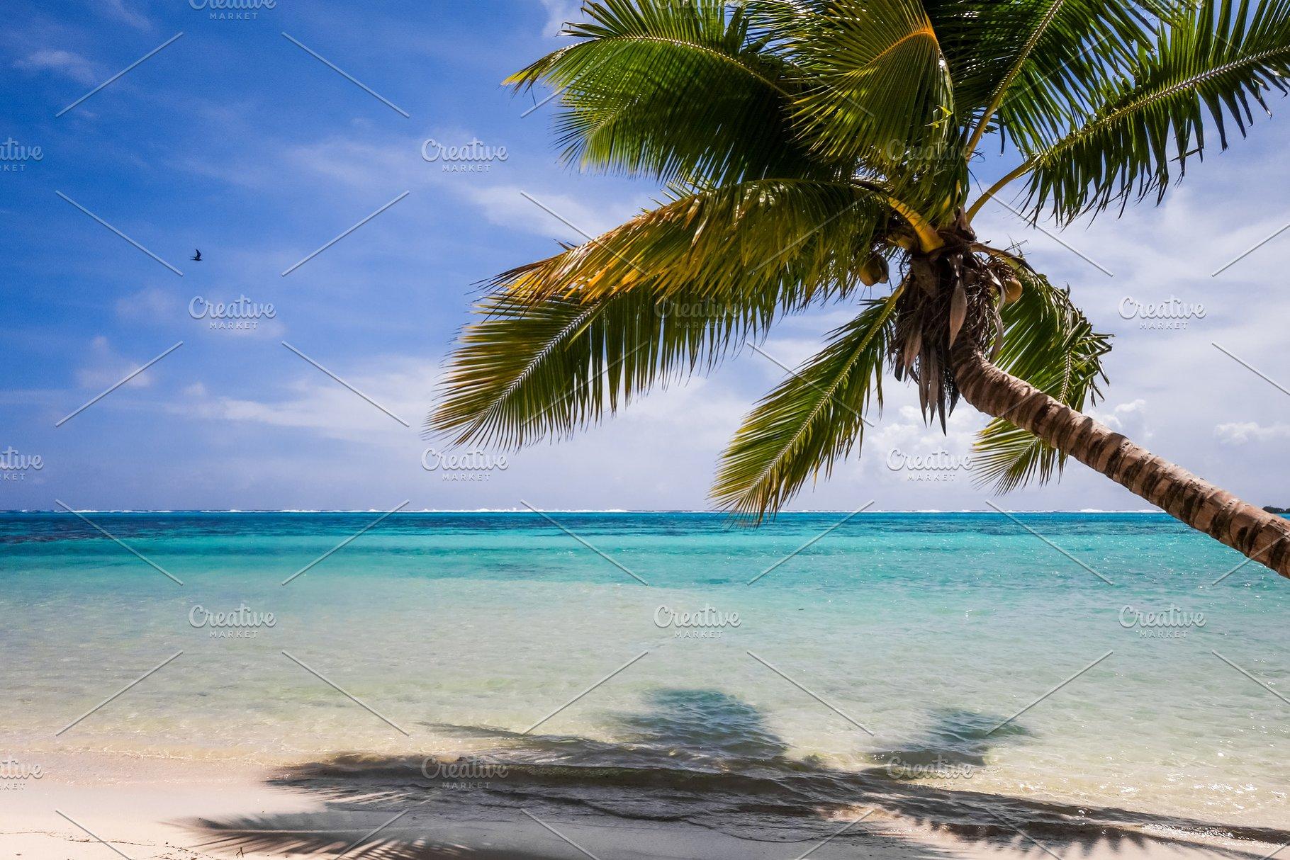 Paradise Tropical Beach And Lagoon I
