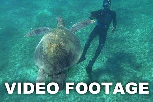 Diver Shooting a Big Sea Turtle