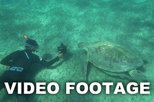 Shooting sea turtle underwater