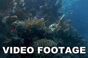 Underwater scene of huge coral reef