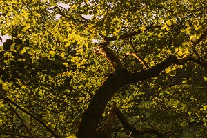Warm Summer Light in Tree