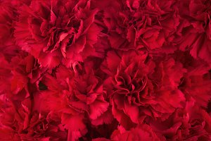 Bouquet of red flowers carnation.