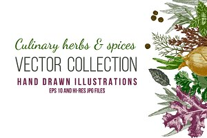 Culinary herbs & spices vector set