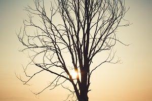 Dead tree at sunrise