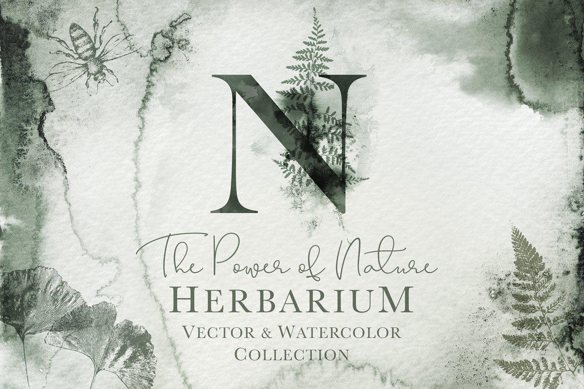 Herbarium: Design Set