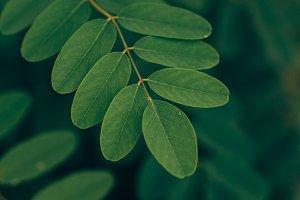 Fresh green Leaves, Dark Background