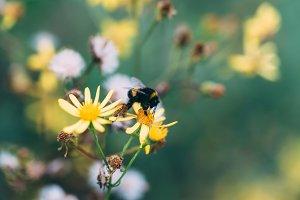 Bumblebee #03