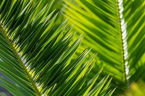 Green Palm Leaves In Tropical Forest High Quality Nature Stock Photos Creative Market This set includes 28 tropical leaves brushes that you may use as stamp brushes in photoshop. green palm leaves in tropical forest