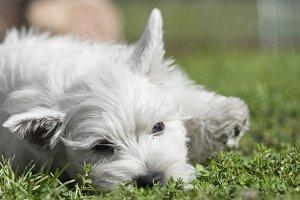 Gorgeous white puppy