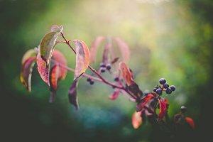 iseeyouphoto autumntones