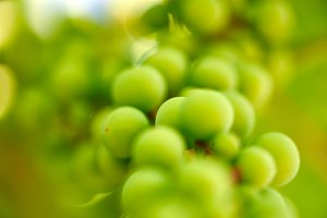 Green grapes blurry background