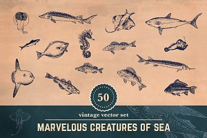 50 Vintage Fish Illustrations