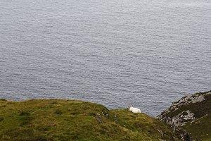 Green coast of Ireland