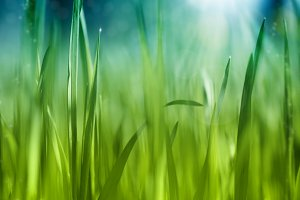 Grass abstract background