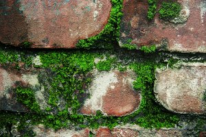 Moss on Brick (Photo)