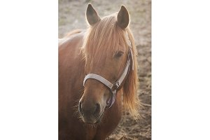 Sunlit Brown Horse (Photo)